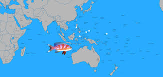 Palau Map Ultra Rare Aurora Anthias Collected In The Philippines Reefs Com