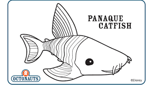 panaque catfish disney junior india