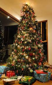 pines and natural christmas trees in bogota colombia