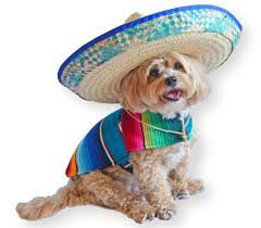 Halloween Costumes For Dogs Perfect Halloween Costumes For Dogs In Wheelchairs