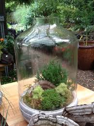 terrariums easy peasy u2014 b b barns garden center u0026 landscape services