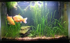 aquarium decorations fish aquarium decorations cheap gold fish tank decoration items