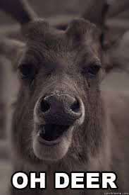 Oh Deer Meme - oh deer memes quickmeme
