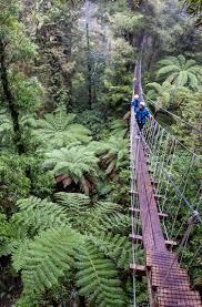 Treetop Canopy Tours by Aoraki Lake Pukaki Zipline Canopy Tour U2013 New Zealand