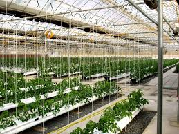 Hobby Greenhouses Greenhouse Nursery Supplies Professional Commercial Greenhouses
