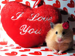 happy valentines day ideas quotes images pictures poems