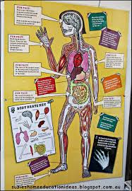 Human Body Anatomy Pics Suzie U0027s Home Education Ideas 8 Ideas For Learning About The Human