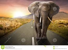 elephant walking on the road royalty free stock photography