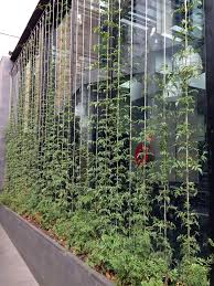 Hops On Trellis 90 Best Greenwall Images On Pinterest Landscaping Garden And