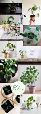 64 best cool plants images on pinterest plants gardening and