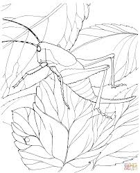 grasshopper on tree coloring page free printable coloring pages