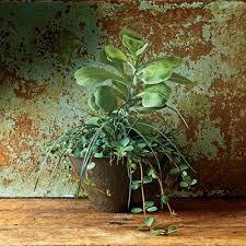 Indoor Garden Containers - image result for indoor garden wild heineken pop up h41