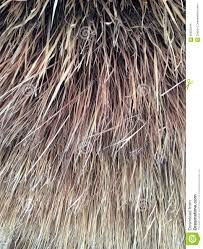 dried ornamental grasses stock photo image of background 56925244