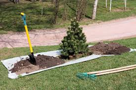 tree moving tips when and how to transplant a tree or shrub