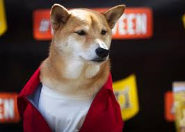 Meme Shiba Inu - the shiba inu went viral online what happened to the breed in real