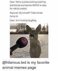 Funny Deer Memes - 25 best memes about deer deer memes