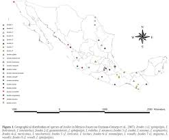 Coyoacan Mexico Map by