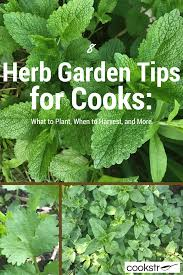 8 herb garden tips for cooks what to plant when to harvest and