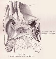 Anatomy Ear File Diagrammatic View Of The Ear Jpg Wikimedia Commons