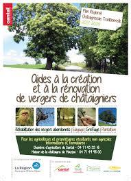 chambre d agriculture cantal aide à la création et à la rénovation des vergers de châtaigniers