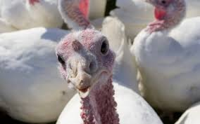 Why Do We Celebrate Thanksgiving Day History Meaning Why Do We Eat Turkey On Thanksgiving Wonderopolis