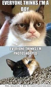 Cat Problems Meme - cat problems grumpy cat and venus the kitty my favorite meme so