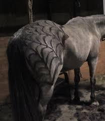 horse skeleton halloween creepy clips greta alexandra oskolkov schneider u0027s skeleton horse