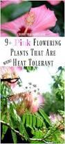 9 pink flowering plants that are heat tolerant plantas