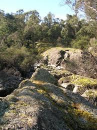 western australia native plants western australia native plants are flowering simply living