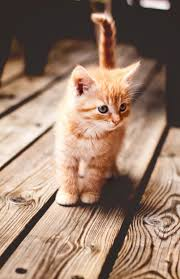 beautiful kittens what a darling cute dogs and cats pinterest cat babies and