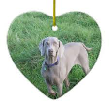 weimaraner lover ornaments keepsake ornaments zazzle
