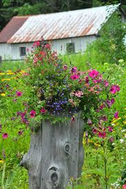 native plant sale muskoka conservancy 59 best gardening tips images on pinterest blossoms city