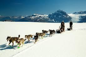alaska day tour glacier dogsledding palmer wasilla anchorage