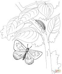 butterfly is flying to the tree coloring page free printable