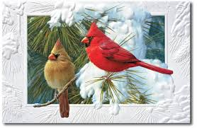 cardinal makes a splendid symbol of season our