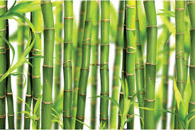 bamboo wall murals bamboo element wall mural contemporary wall mural with placed green bamboo wall mural bamboo forest