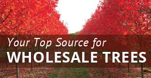wholesale trees from northern nursery inc
