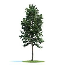 green tree pine 3d model cgtrader