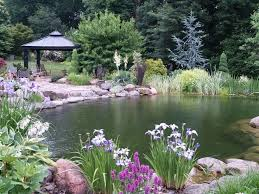 Backyard Swimming Ponds by 50 Best Ponds Images On Pinterest Dock Ideas Backyard Ideas And