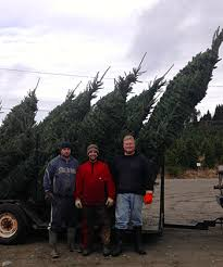 wholesale tree prices trees for ceilings