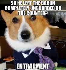 Lawyer Dog Meme - the best of lawyer dog memes