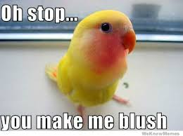 Oh You Stop It Meme - oh stop you make me blush weknowmemes