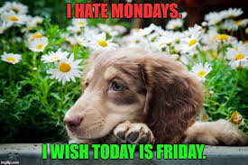 Today Is Friday Meme - i hate mondays i wish today is friday meme