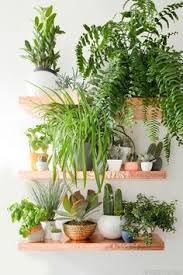 Urban Jungle Living And Styling by Amazonsmile Urban Jungle Living And Styling With Plants