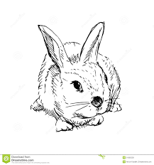 sitting rabbit sketch stock image image 12681251