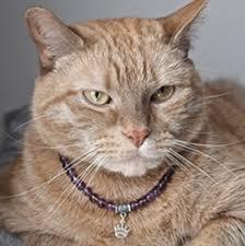 cat jewelry necklace images Home geekonomics cat jewelry nerdist jpg