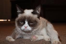 Frown Cat Meme - meme of the year grumpy cat