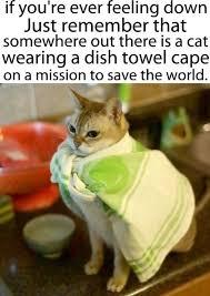 Feeling Down Meme - respectful memes catz pigz pinterest memes