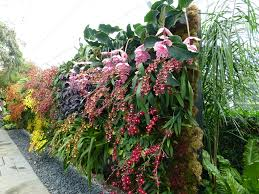 Vertical Garden Walls by Orchid Show Vertical Garden Wall 2 Dancing Lady Orchids