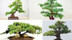 20 enchanting miniature bonsai decoration ideas